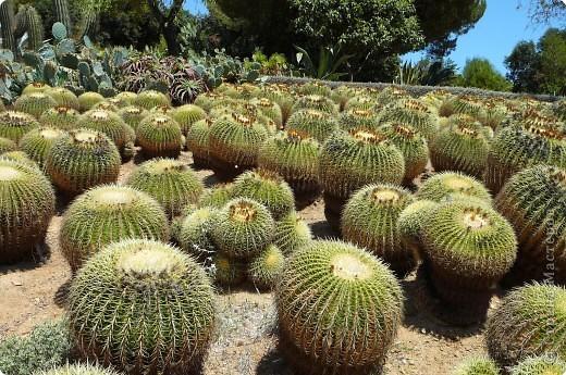 Недалеко от городка, в котором мы отдыхали, на горе обнаружился Сад кактусов. фото 10