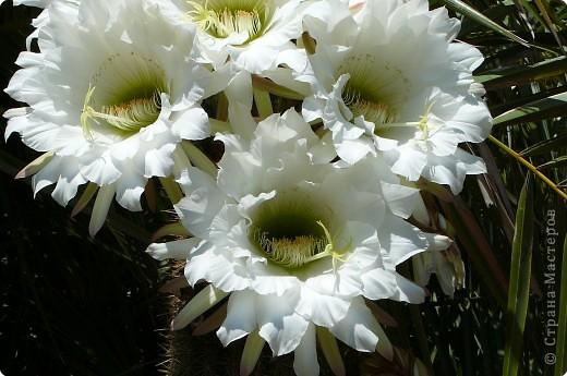 Недалеко от городка, в котором мы отдыхали, на горе обнаружился Сад кактусов. фото 12