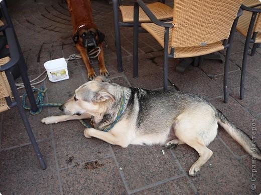 Мне очень понравился Пудель Дорони,а т. к. он ищет друзей, то я предлагаю ему фото.Может быть кто-то из испанских или французских собачек ему приглянется. фото 5