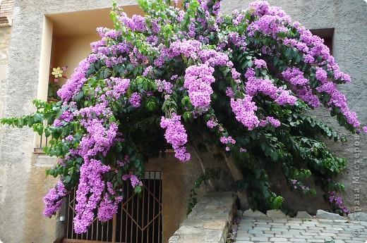 Фоторепортаж цветы испании фото 1