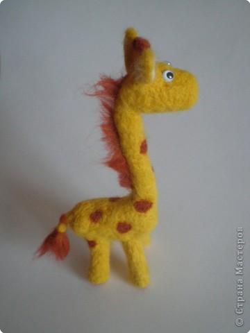 Фельдцевание: Любопытный жираф