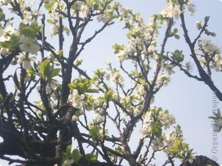 Яблони в цвету - какое чудо! фото 3