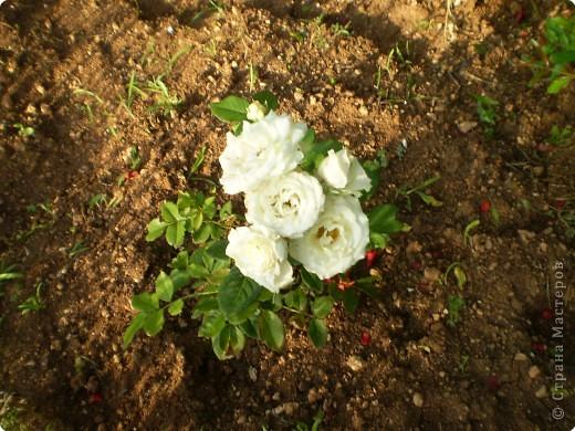 Многолетники, без названия, цветут уже почти 2 месяца фото 13