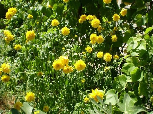 Многолетники, без названия, цветут уже почти 2 месяца фото 4