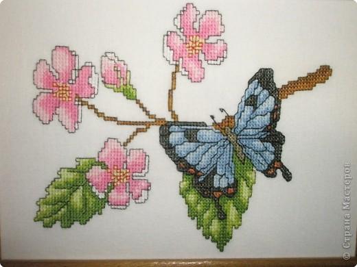 Вышивка крестом: Бабочки фото 2