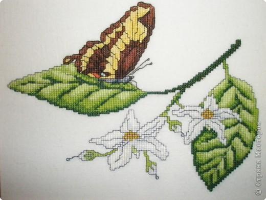 Вышивка крестом: Бабочки фото 1