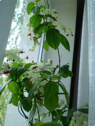 Цветы на подоконнике фото 3