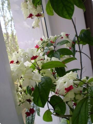 Цветы на подоконнике фото 2