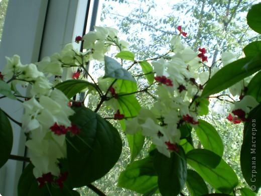 Цветы на подоконнике фото 4