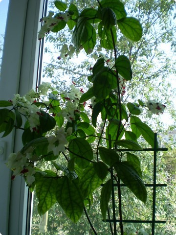 Цветы на подоконнике фото 1