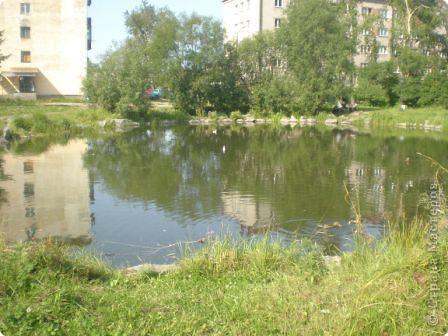 У нас недалеко от дома есть пруд. Недавно туда прилетели уточки. Когда мы всей семьёй ходили туда, их было, по-моему, пять. По последним известиям, их уже 9. Не знаю, откуда они появляются. фото 2