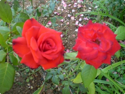 Многолетники, без названия, цветут уже почти 2 месяца фото 10