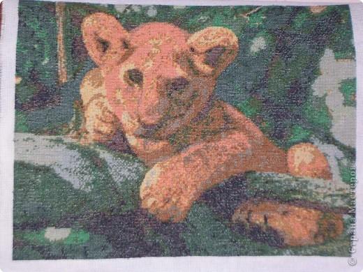 Амурский тигр фото 2