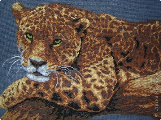 Амурский тигр фото 3