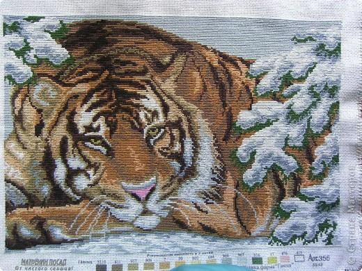 Амурский тигр фото 1