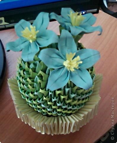 Теперь и у меня есть цветущий кактус!!! фото 3