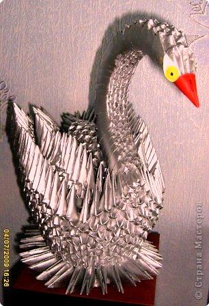 Лебедь серебристый