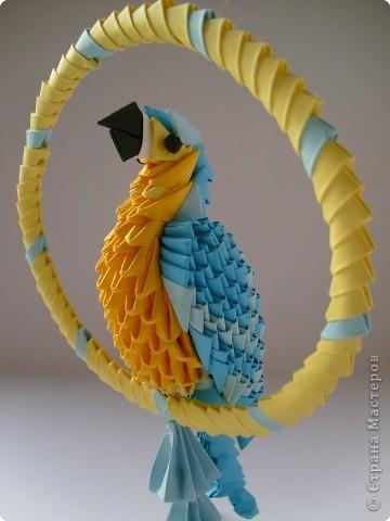 Девочка Ванилька и ее любимец попугай Крош (ара) фото 4