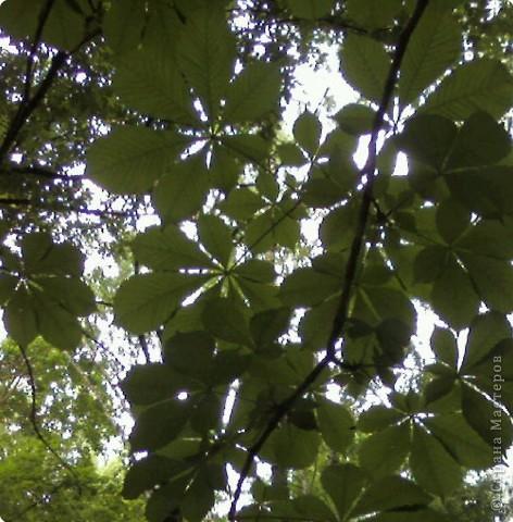 Очень интересно смотреть на солнышко сквозь листву. Листва перестает быть привычной и превращается с волшебный занавес. фото 3