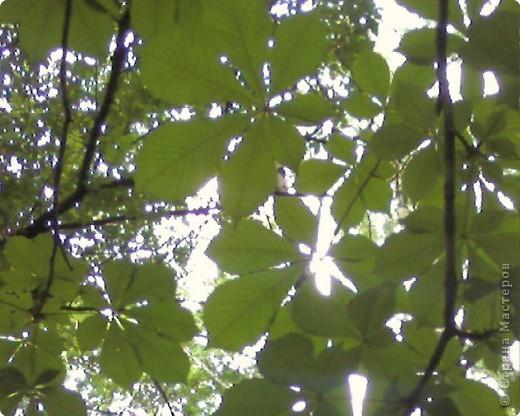 Очень интересно смотреть на солнышко сквозь листву. Листва перестает быть привычной и превращается с волшебный занавес. фото 1