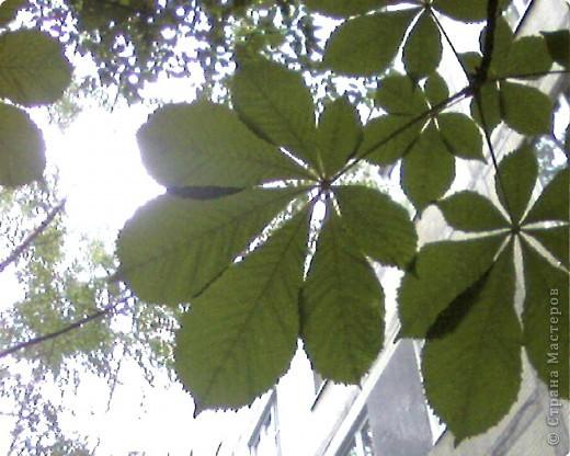 Очень интересно смотреть на солнышко сквозь листву. Листва перестает быть привычной и превращается с волшебный занавес. фото 4