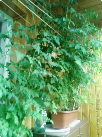 Балконные шэрики :) фото 1