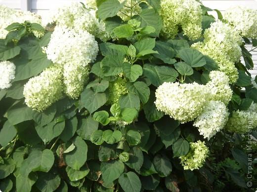 Цветы июля фото 1
