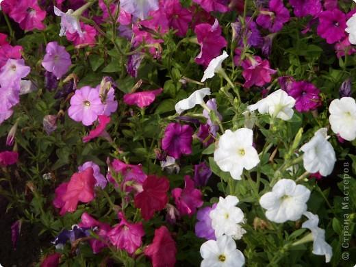 Цветы июля фото 2