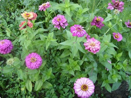 Цветы июля фото 13