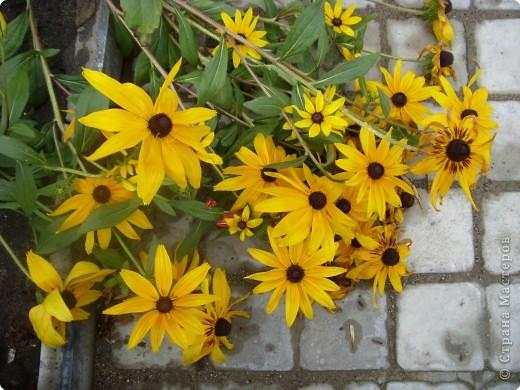 Цветы июля фото 4