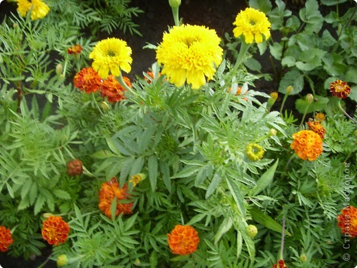 Цветы июля фото 6