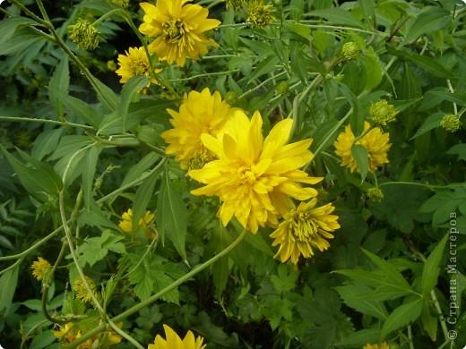 Цветы июля фото 5