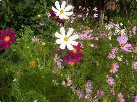 Цветы июля фото 8