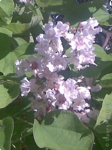 очень красиво цветёт дерево, но как называется не знаю.
