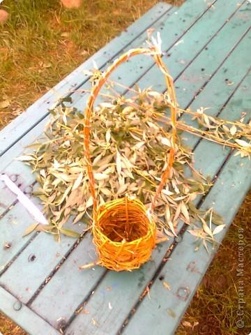 Плетение: Кашпо  фото 1