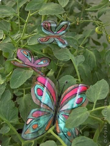 Вот такие бабочки залетели в мой сад - огород! фото 1