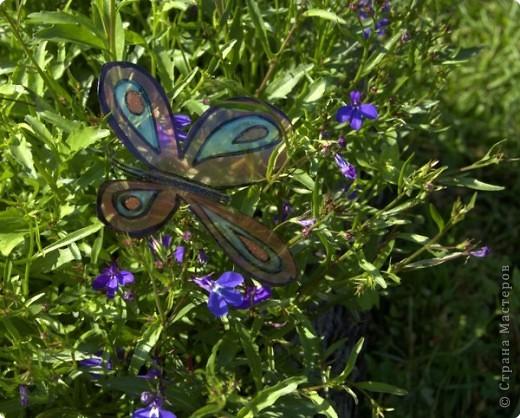 Вот такие бабочки залетели в мой сад - огород! фото 2