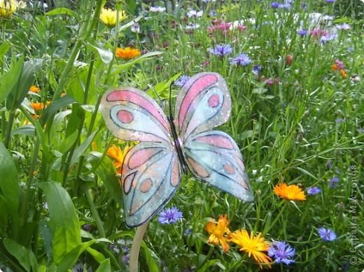 Вот такие бабочки залетели в мой сад - огород! фото 3