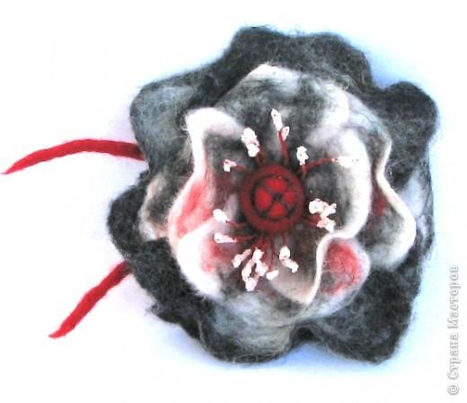 сиреневая роза фото 5