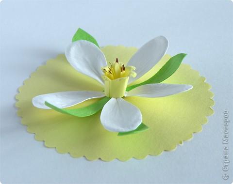 Бумагопластика: Нарцисс фото 1