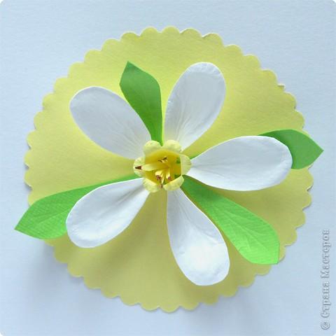 Бумагопластика: Нарцисс фото 2