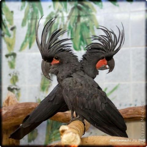 Попугайчики!!!
