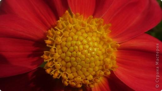 Вот смотрите , внутри цветка еще цветок! Кто это видит? Редко кто. Вот вы и есть этот цветок! Всем удачи, любви и свершений!