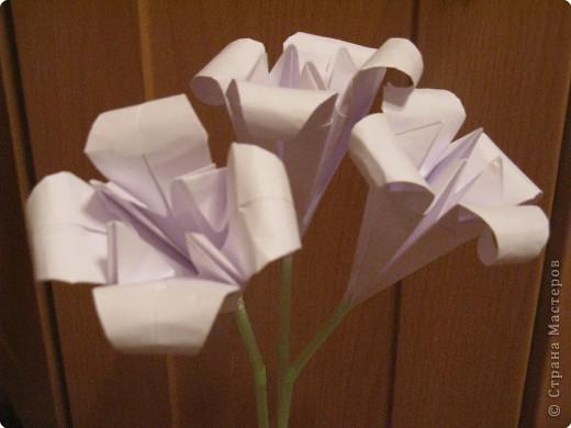 Вот такой вот букет лилий я получила сегодня от своей доченьки просто так. Мне было очень приятно!!! фото 2