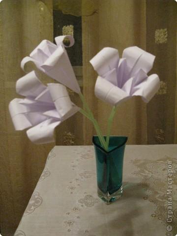 Вот такой вот букет лилий я получила сегодня от своей доченьки просто так. Мне было очень приятно!!! фото 1
