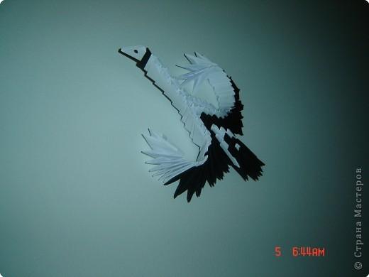 теперь мою стену украшают две таких птицы фото 2