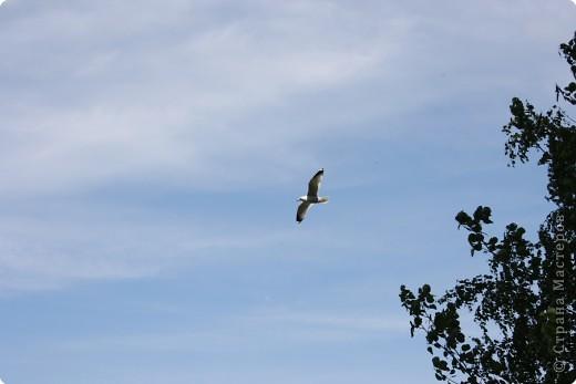 """""""..все ваше тело от кончика одного крыла до кончика другого-это только мысль."""" фото 1"""