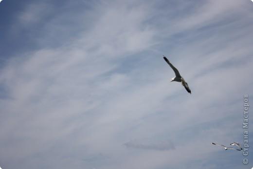 """""""..все ваше тело от кончика одного крыла до кончика другого-это только мысль."""" фото 6"""