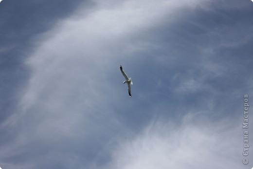 """""""..все ваше тело от кончика одного крыла до кончика другого-это только мысль."""" фото 8"""