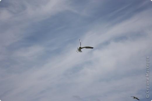 """""""..все ваше тело от кончика одного крыла до кончика другого-это только мысль."""" фото 11"""